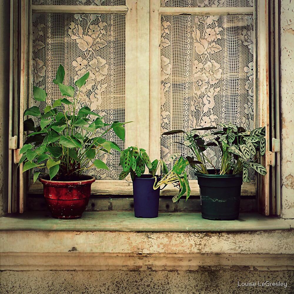 _ plants _ by Louise LeGresley