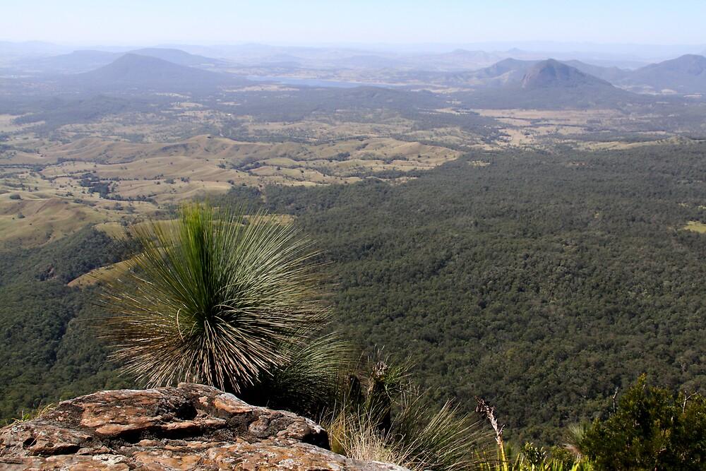 Main Range National Park by smallan