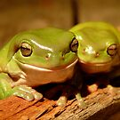 Frogs by ingridrob