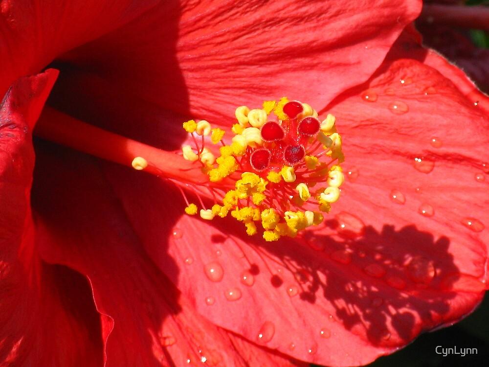 Spring Red by CynLynn