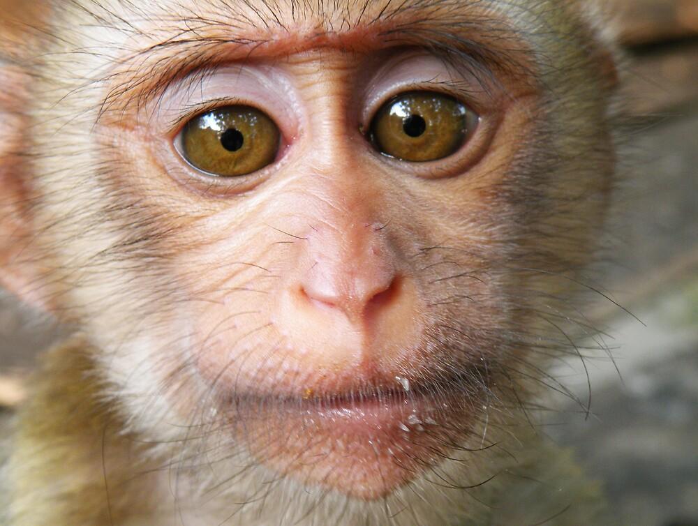Monkey face by AnnetteW