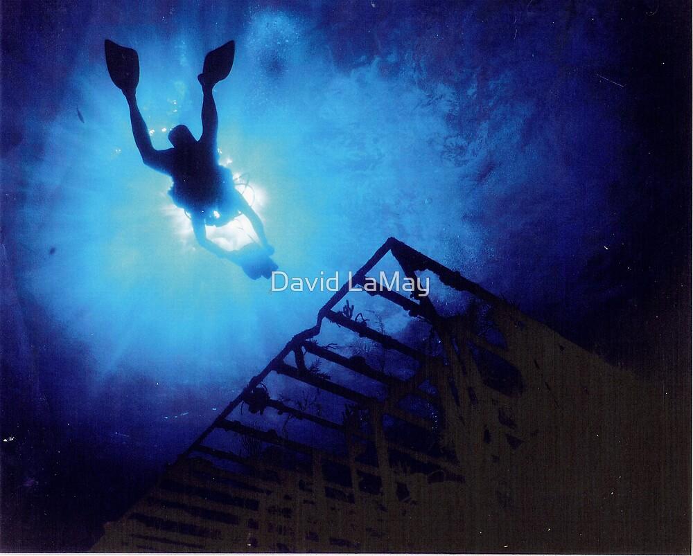 Video Diver by David LaMay
