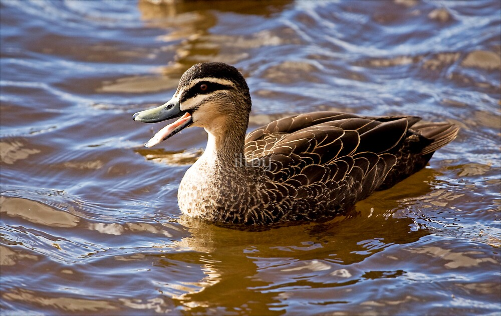 Quack by iltby