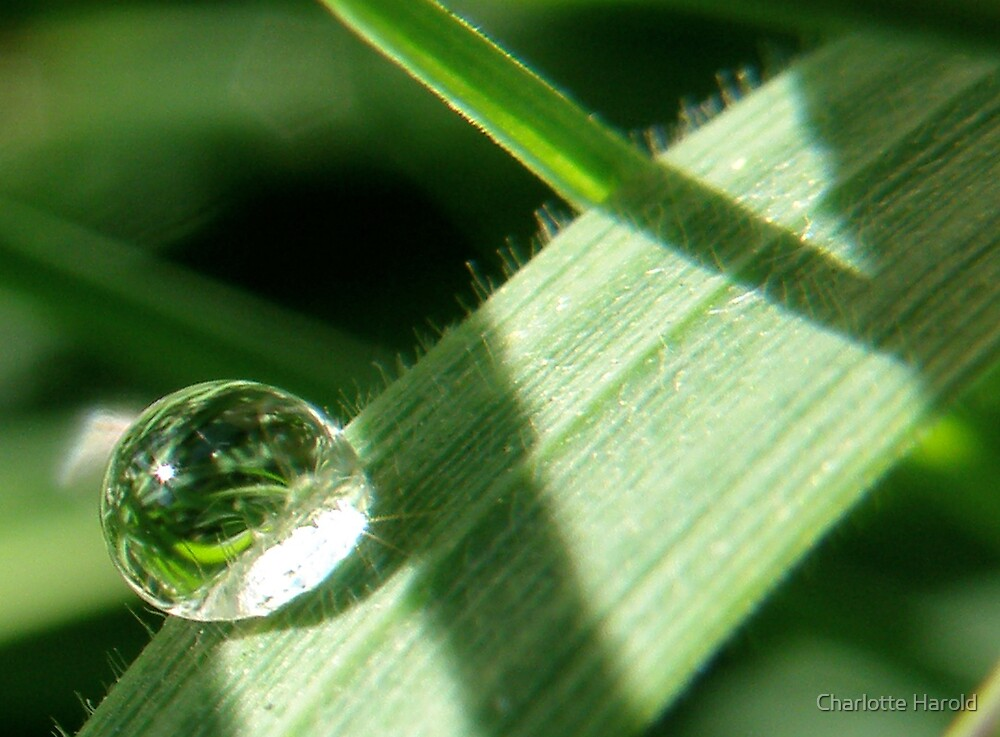 GreenRainDrop by Charlotte Harold