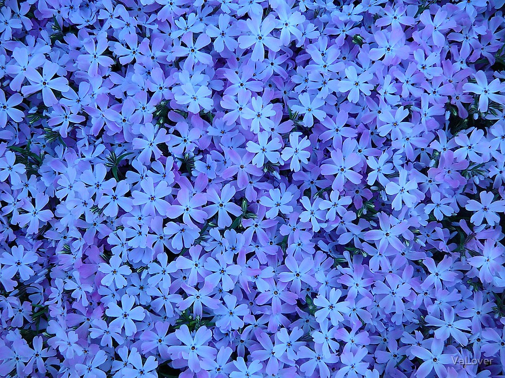 The Color of Purple! by VaLover