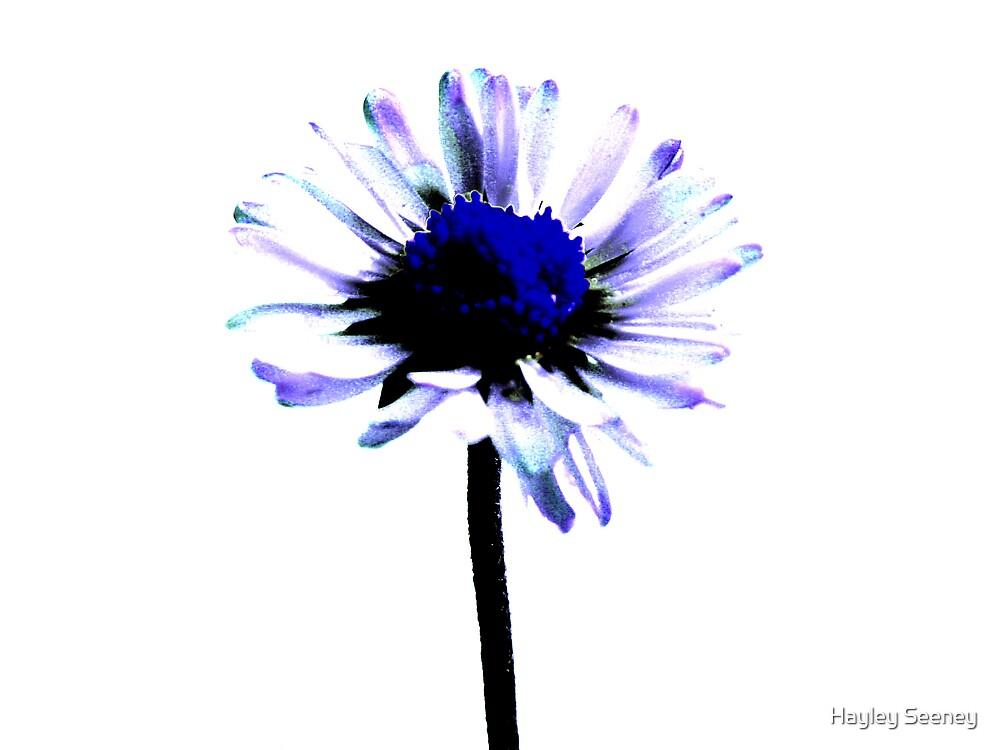 Summer blues by Hayley Seeney