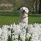 Ditte and white hyacinths and a lovely smile by Trine