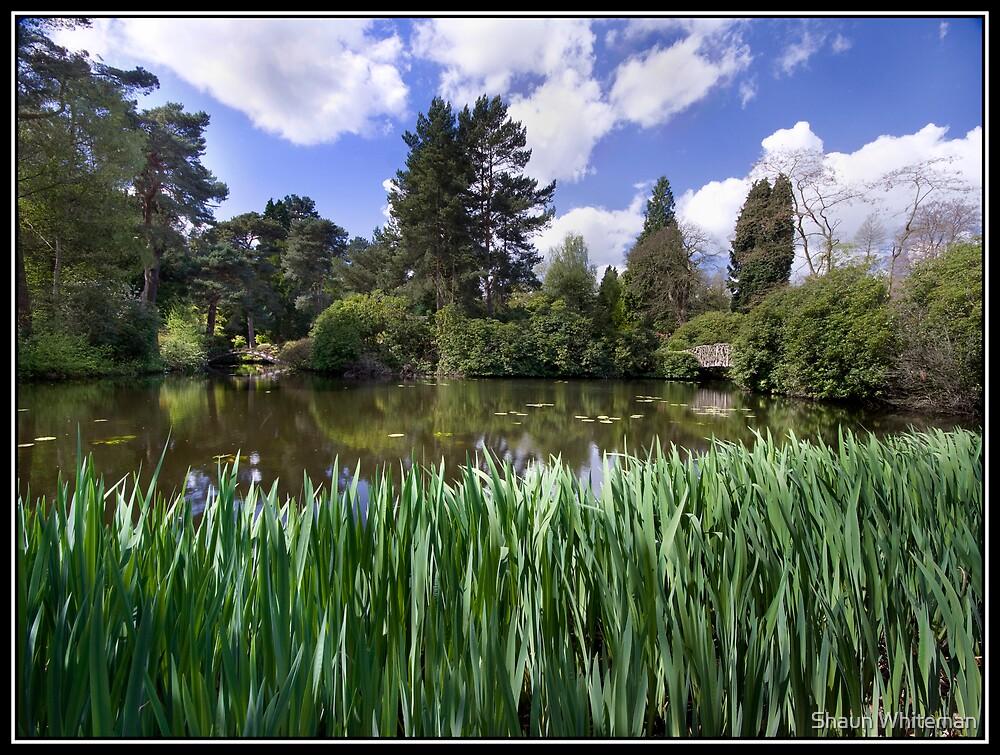 Lake at Tatton Park by Shaun Whiteman