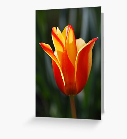 living flame Greeting Card