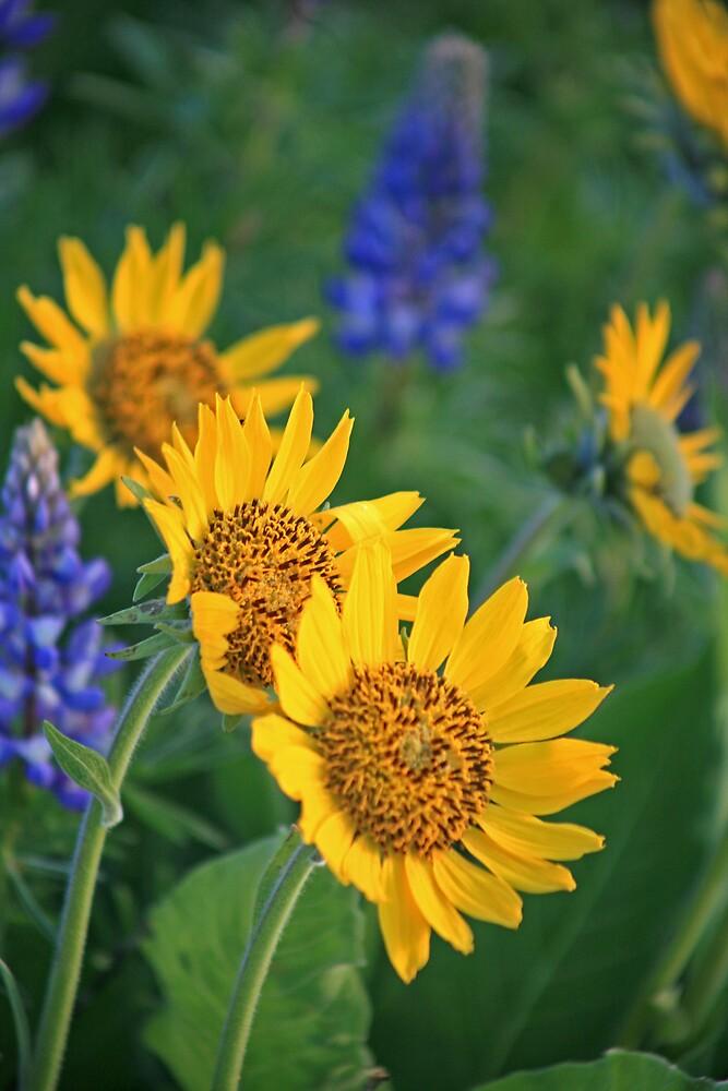 Wild Flowers! by Ran Richards