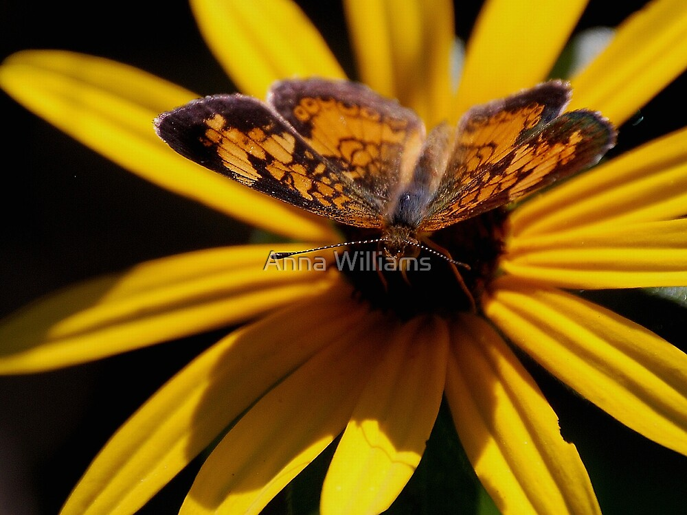 Sunbathing by Anna Williams