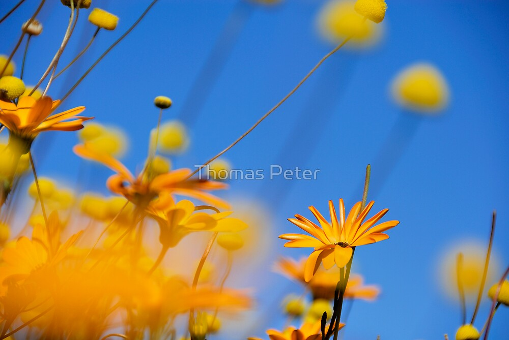 Flowers in the Desert by Thomas Peter