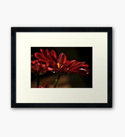 Yellow And Red Flower In Light Framed Print