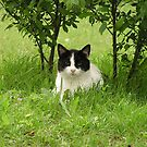 Sugar in the shrubs by Jamaboop