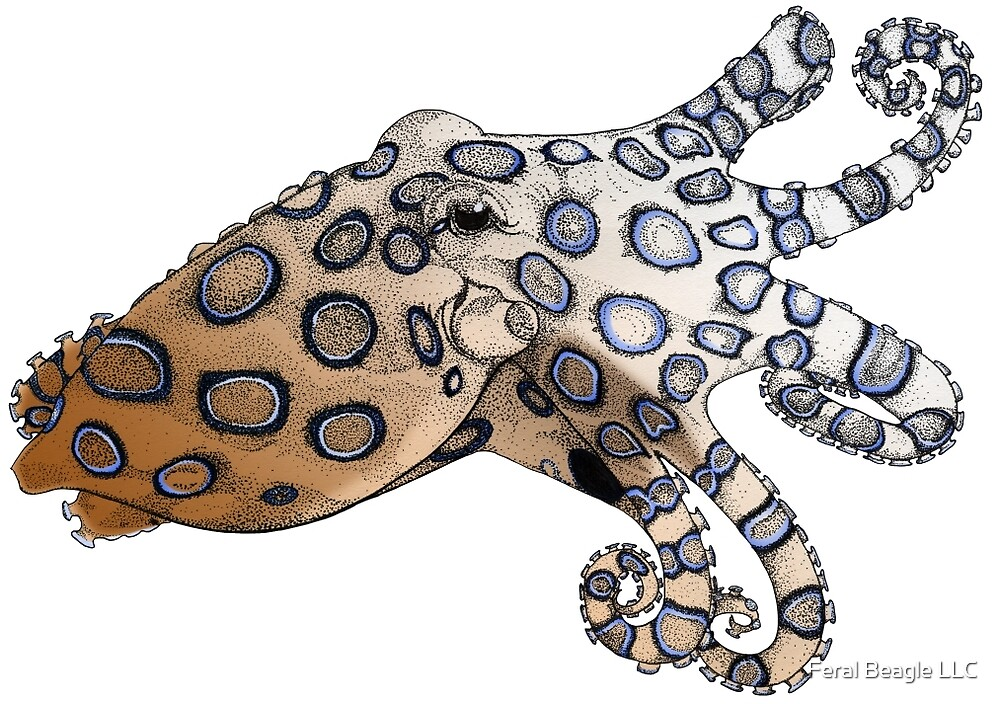 Blue-Ringed Octopus Color by Feral Beagle LLC