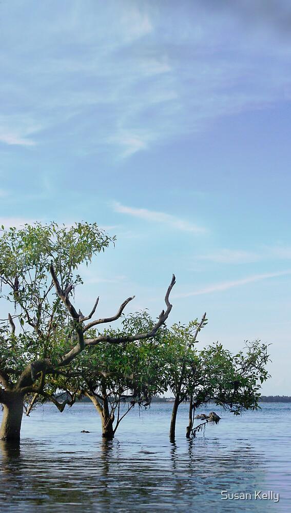 Mangroves, Garners Beach, Queenlsand by Susan Kelly