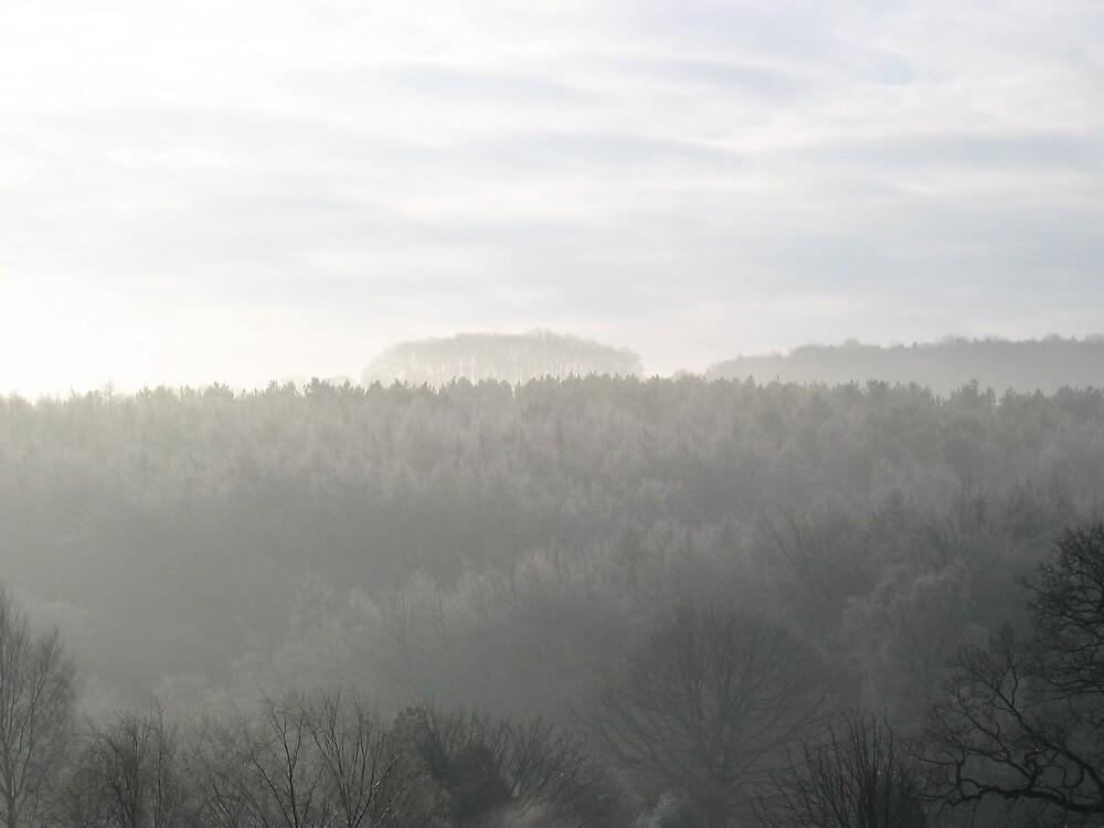 Winter Forest 5 by burlism