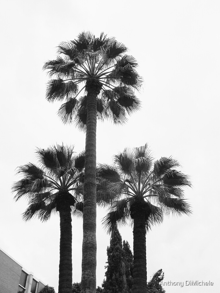 Date Palms by Anthony DiMichele