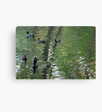 Ducks on Painted Water Canvas Print