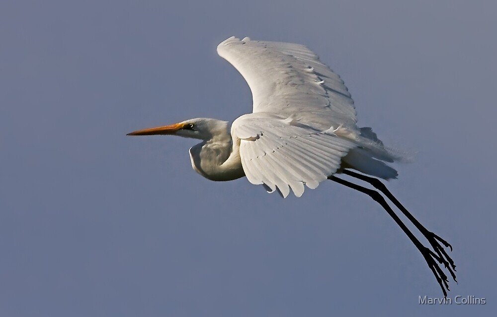 0405093 Great White Egret by Marvin Collins