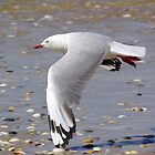 LOW FLYING SEAGULL  by UncaDeej