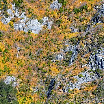 The autumn clours of Tasmania's deciduous beech, Nothofagus gunnii, over Crater Lake, Cradle Mountain National Park by robbywarren
