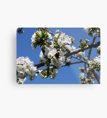 Humble Bumble and Cherry Blossom Metal Print
