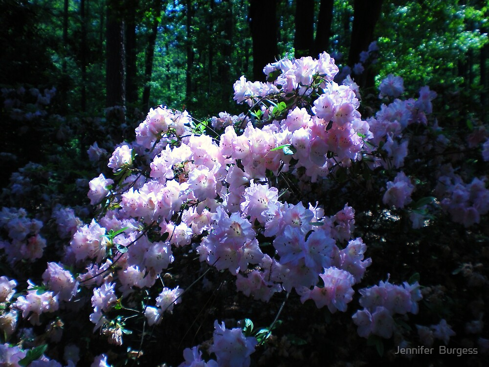 Sunlight Pinks by Jennifer  Burgess
