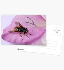 gladiola gourmet Postcards