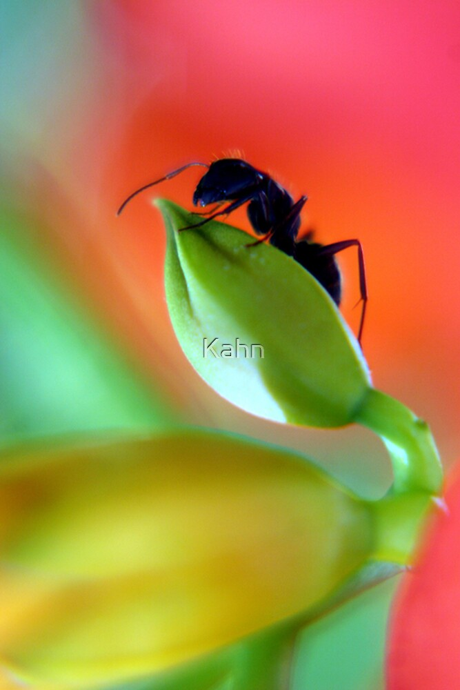 Ant on Flower Bud by Kahn