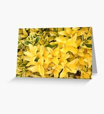 """Yellow's Delight"", Photo Artwork Greeting Card"