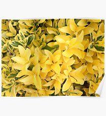 """Yellow's Delight"", Photo Artwork Poster"