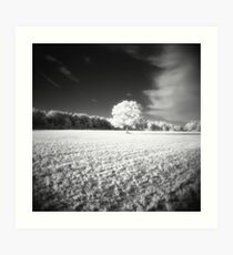 Holga Infrared Tree #7 Art Print