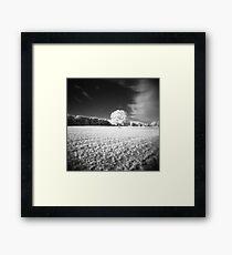 Holga Infrared Tree #7 Framed Print