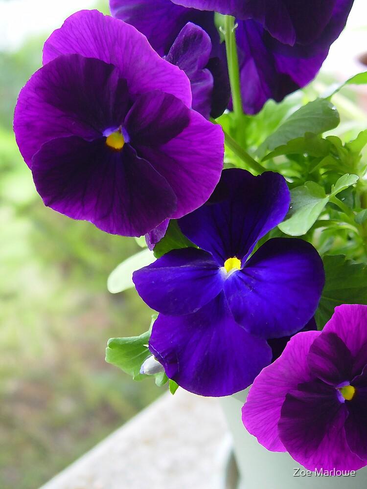 Perfectly Purple by Zoe Marlowe