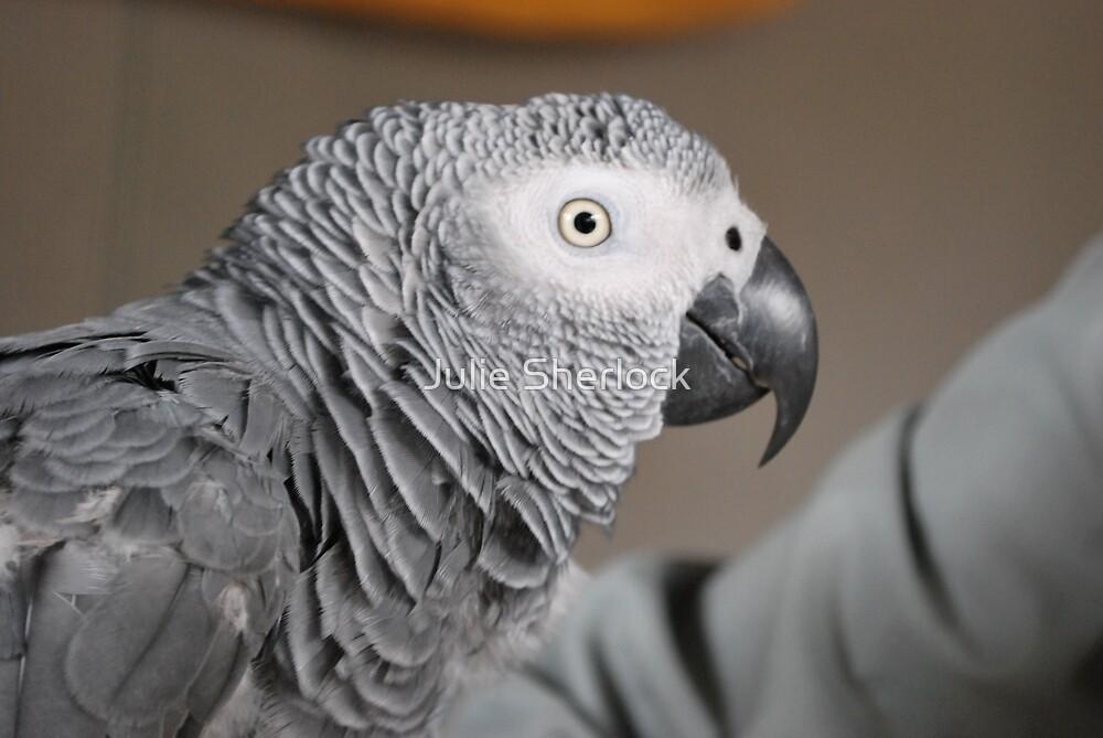 Congo African Grey Parrot by Julie Sherlock