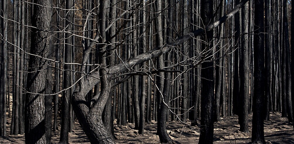 Bushfires 4 by eclectic1