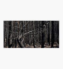 Bushfires 4 Photographic Print