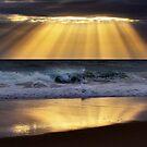 Rays by Ben Ryan