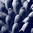 Blue Bananas by Nicholas de Boos