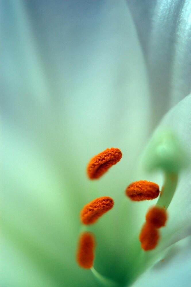 Lillies by resoilse