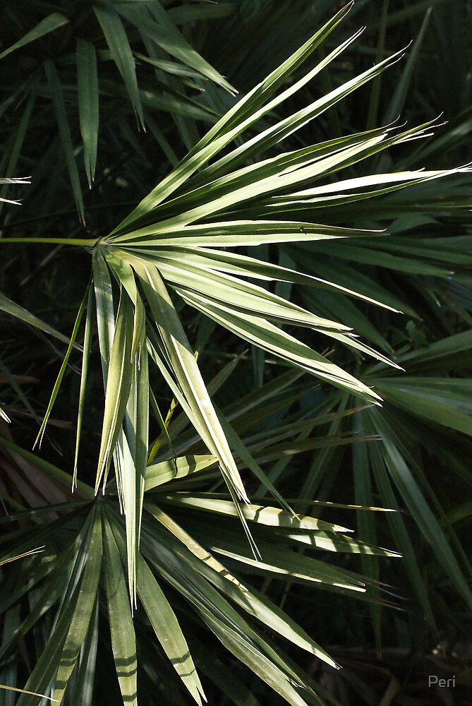Palm Fronds, Shadow & Light by Peri