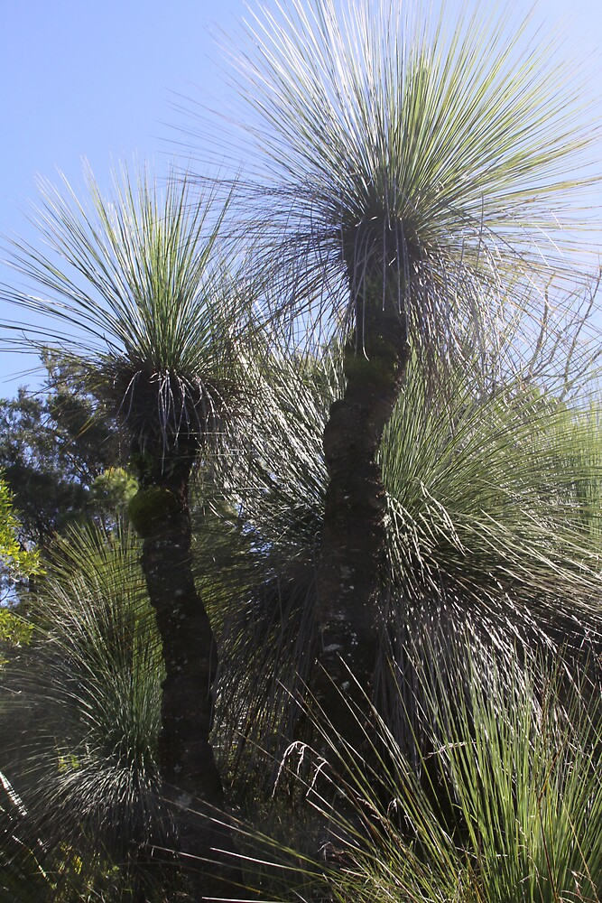 Grass Tree by smallan