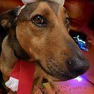 Christmas Dog Card by Bernadette Madden