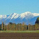 Row of Trees, NZ by John Brotheridge