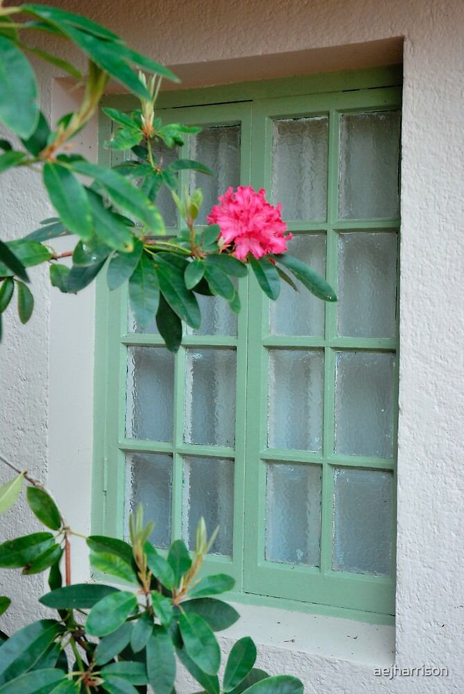 Pretty Window by aejharrison