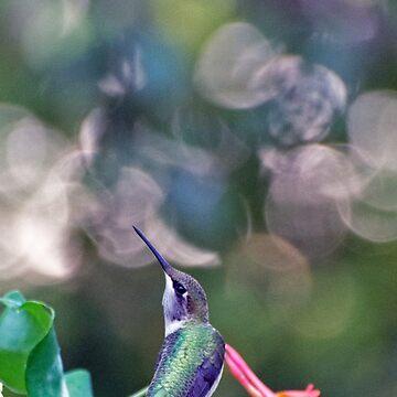 Ruby-throat Hummingbird Perched by VeganBear
