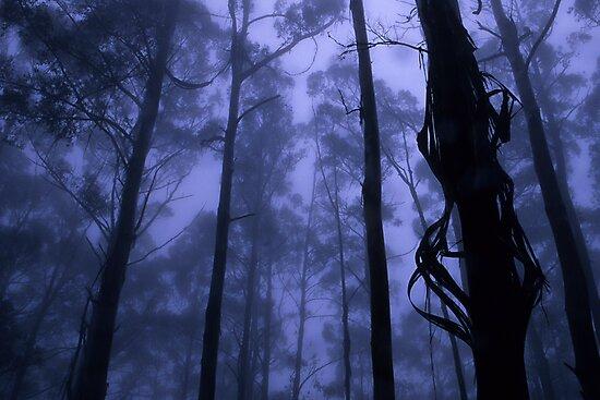Forest Mist by Travis Easton
