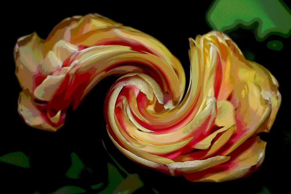A Crazy Tulip by deegarra