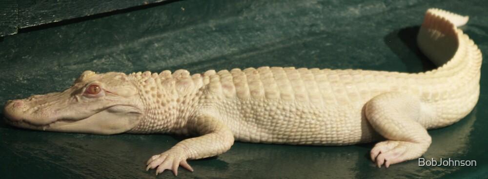 Albino Gator by BobJohnson